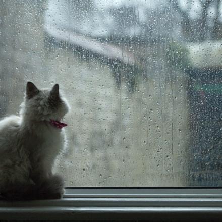 Rainy Day Blues [1/365]