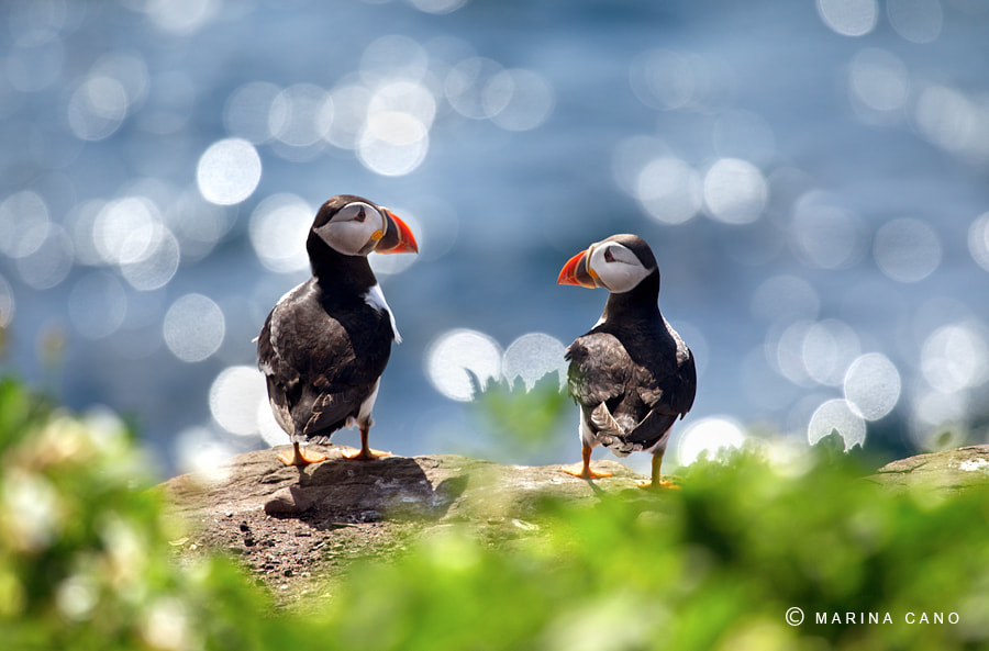 Photograph Farne Islands Chill Out by Marina Cano on 500px