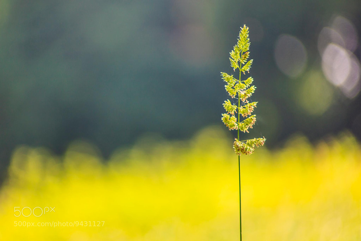 Photograph Tiny Glimpse of Summer by Marco Guerreiro on 500px