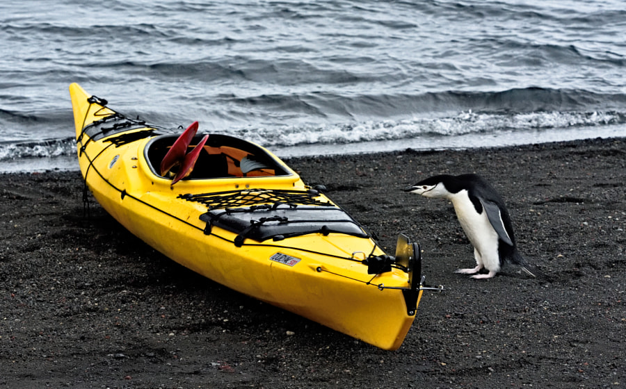 Penguin and kayak by Angik Sarkar on 500px.com