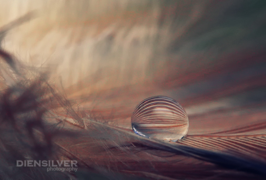 Photograph Dreamin' by Diens Silver on 500px