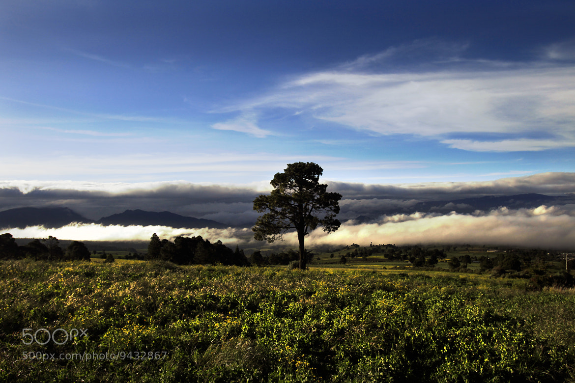 Photograph Tree, clouds and field by Cristobal Garciaferro Rubio on 500px