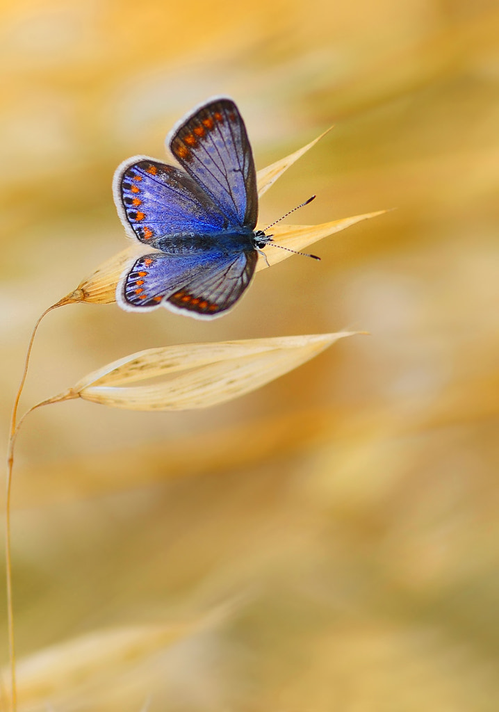 Photograph BLUE by Mustafa Öztürk on 500px