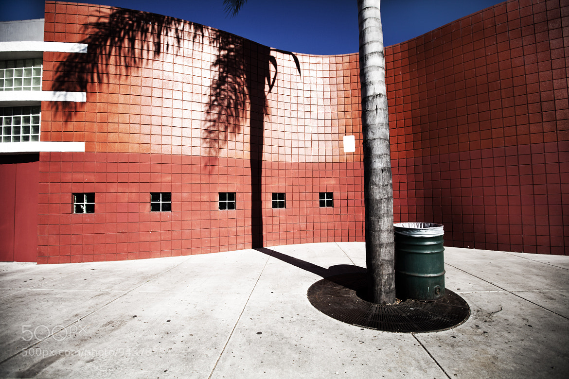 Photograph Palm Shadow by Jason Moskowitz on 500px
