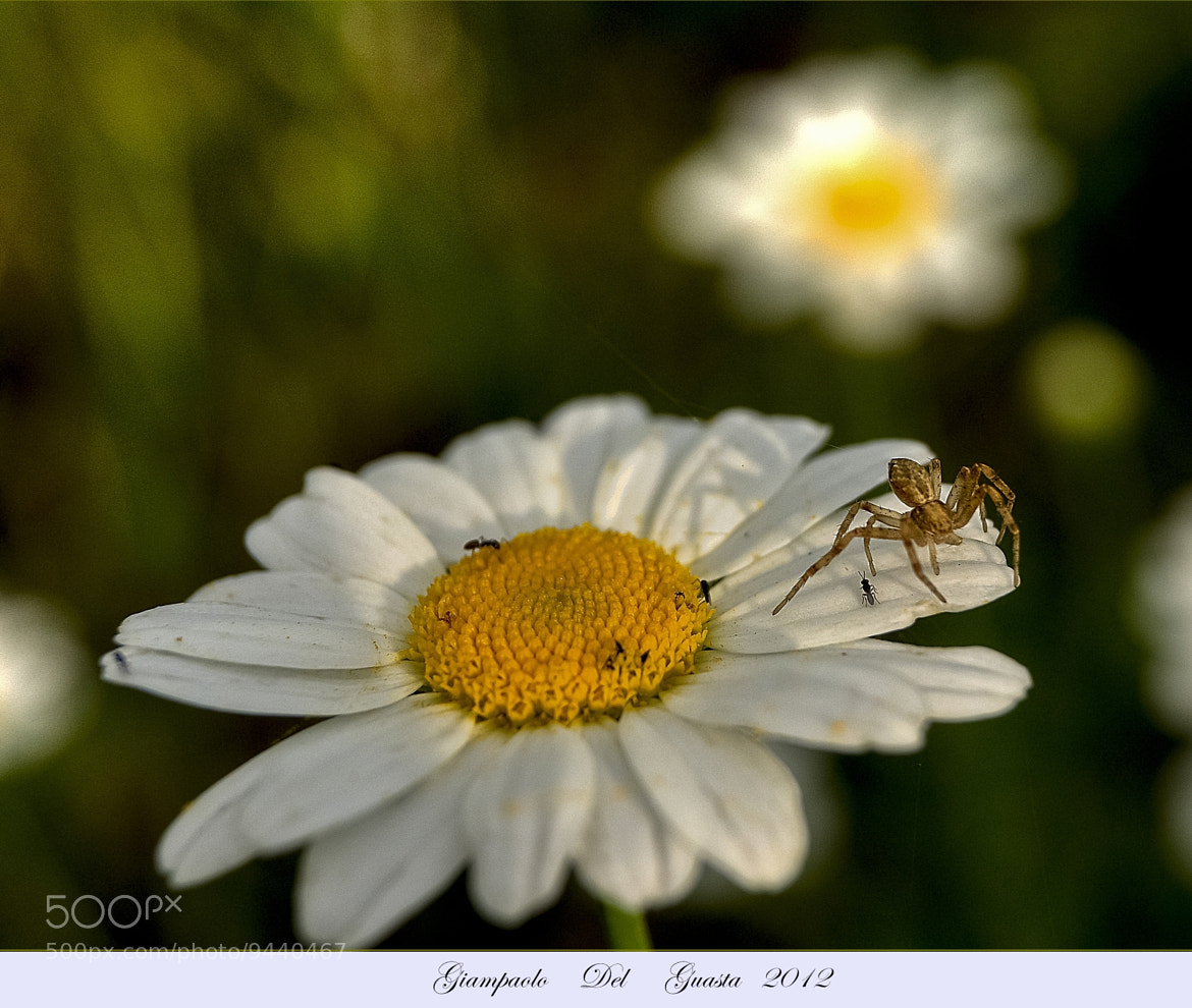 Photograph Macro by Giampaolo Del Guasta on 500px