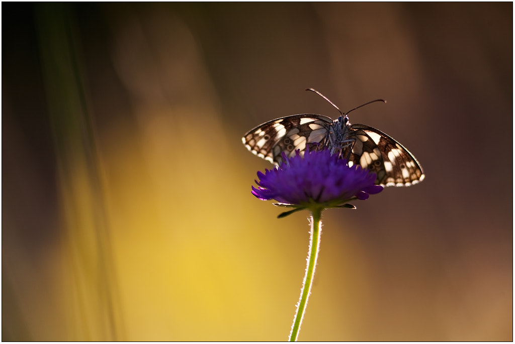 Photograph Butterfly by  Andrea Furlan on 500px
