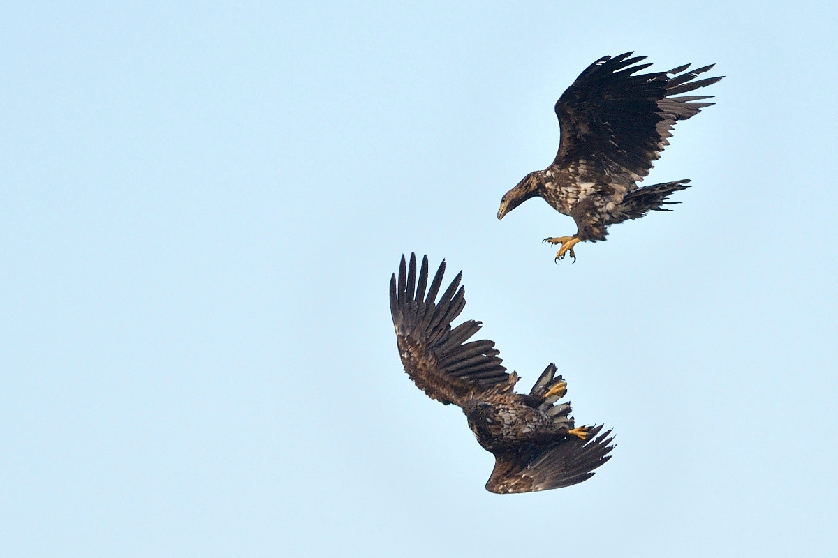 Photograph Fight! by Thomas Osterauer on 500px