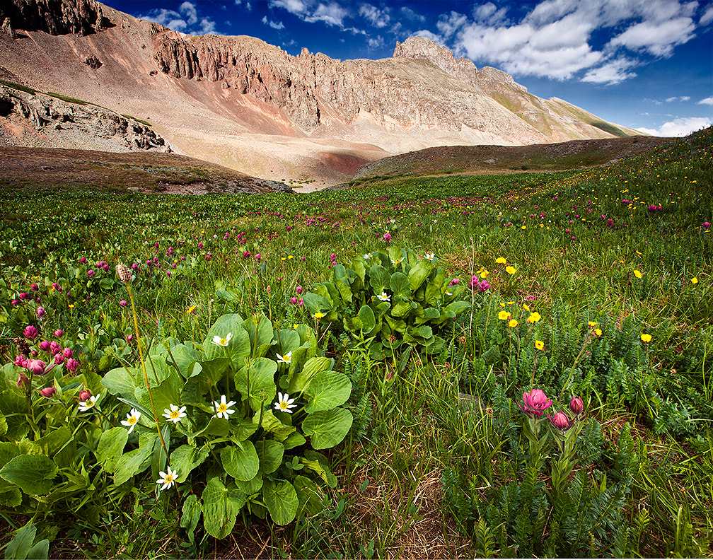 Photograph Mountain Meadow by Frank Comisar on 500px