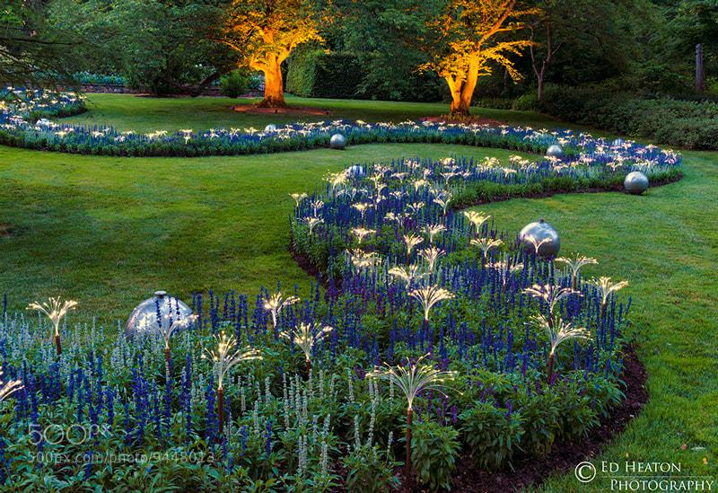Photograph Garden Lights by Ed Heaton on 500px