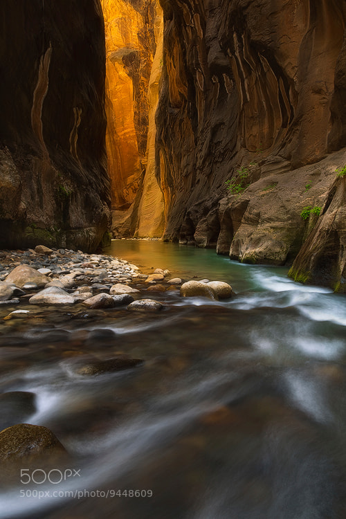 Photograph Quest for Light by David Thompson on 500px