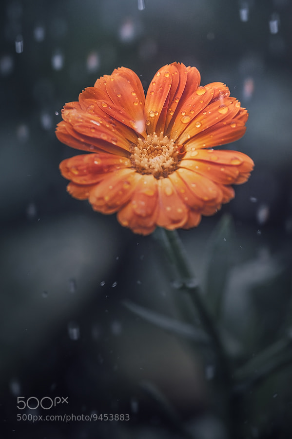 Photograph in the rain... by Michael Mareyen on 500px