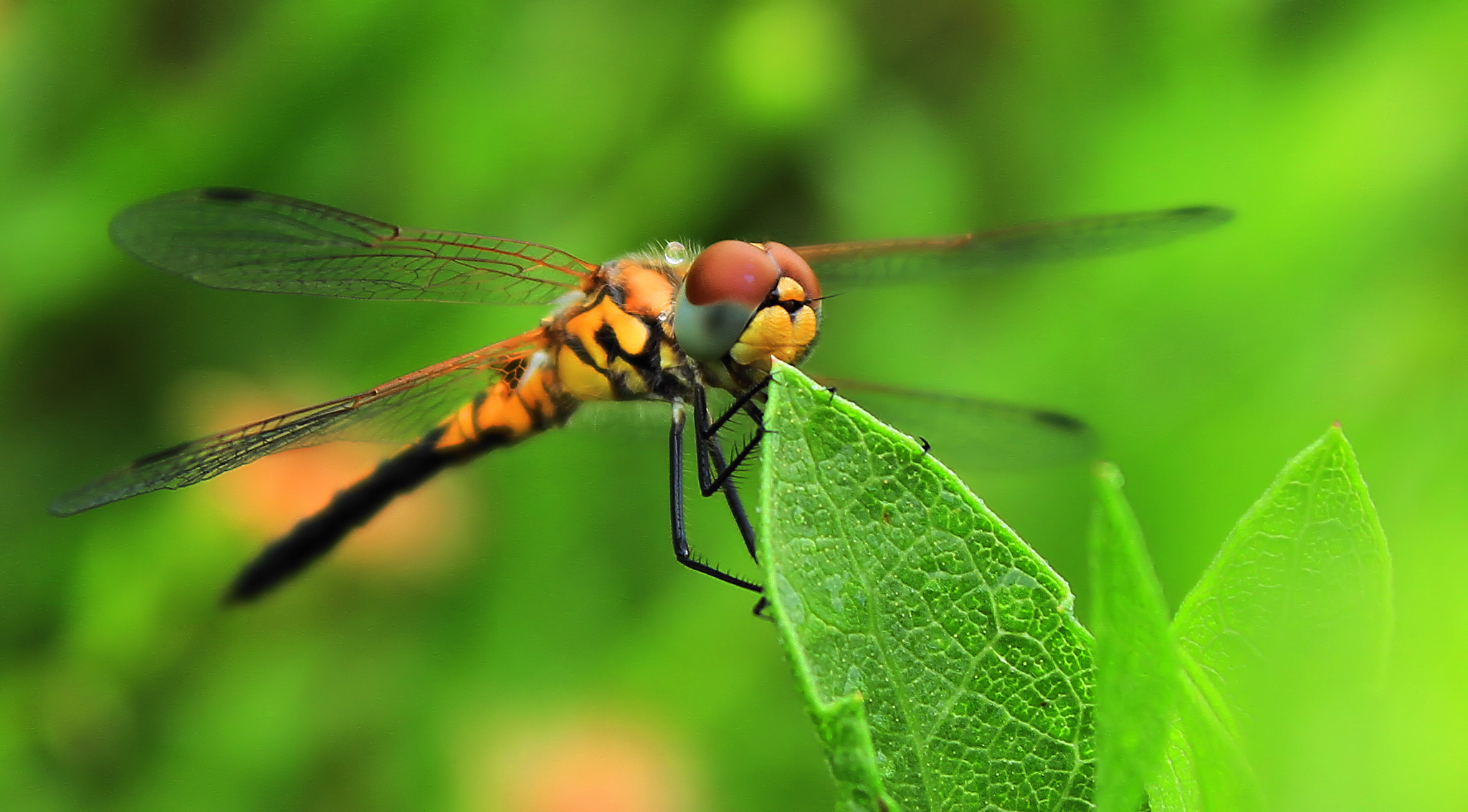 Photograph Dragon Fly by Teddy  Meeks on 500px