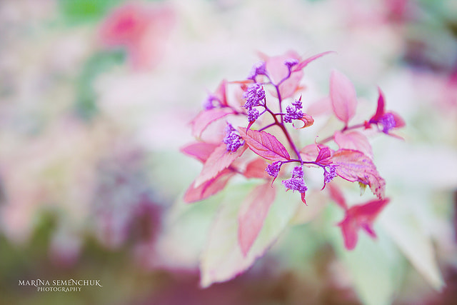 Photograph in the purple by Marina Semenchuk on 500px