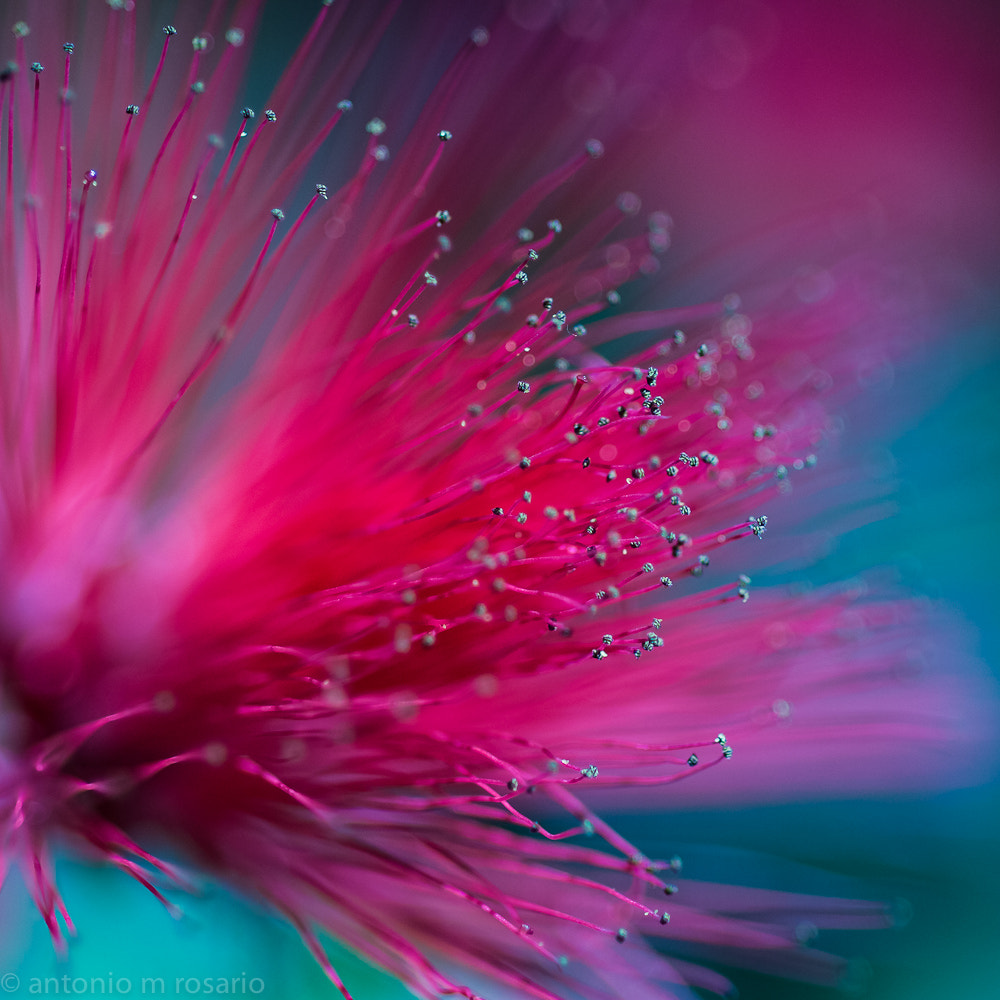 Photograph Nature's Fireworks by Antonio M. Rosario on 500px