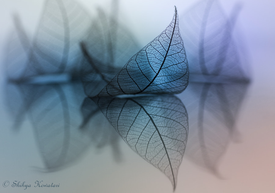 Pliable by Shihya Kowatari on 500px.com