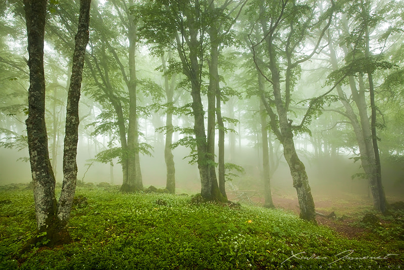 Photograph Misty forest by Xavier Jamonet on 500px