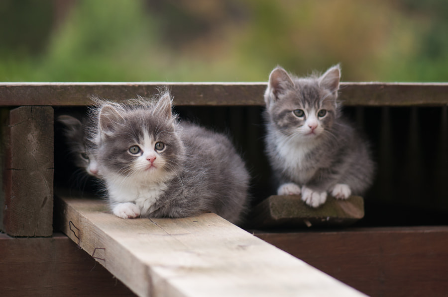 Cute kittens by Camilla Korsnes on 500px.com