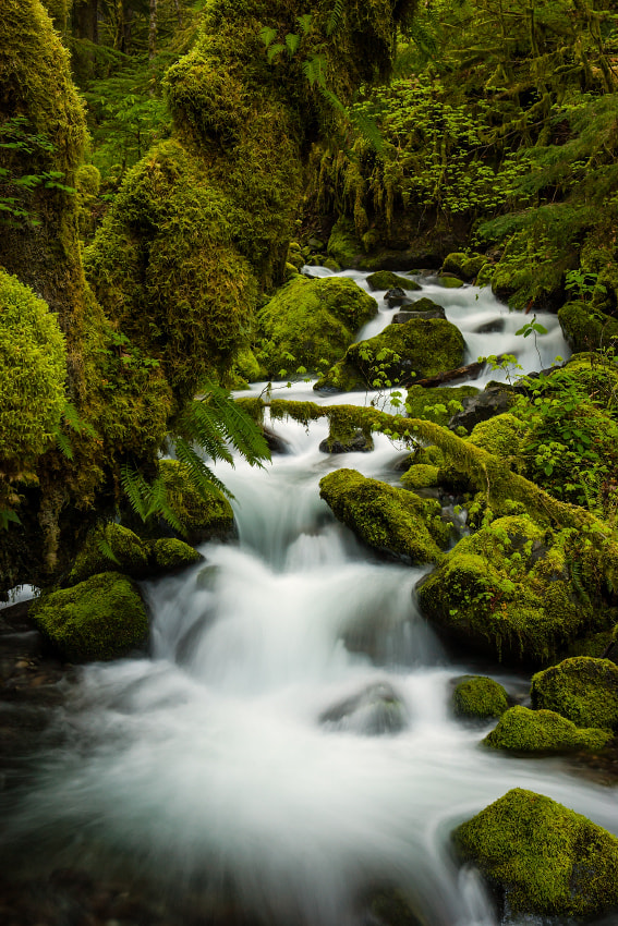 Photograph Spring Creek by Ned Fenimore on 500px