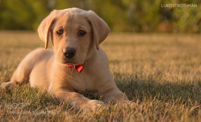 Photograph Puppy Love by Luke Strothman on 500px