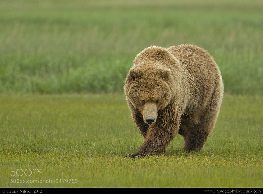 Photograph You Wanna a Piece of Me???? by Henrik Nilsson on 500px