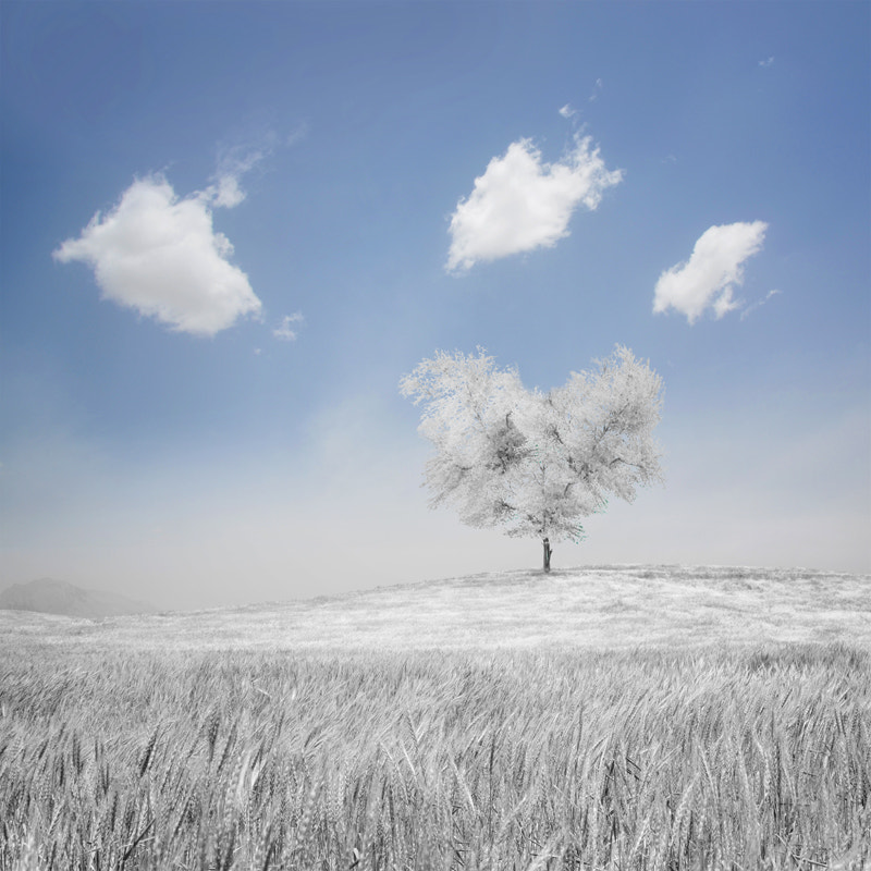 Photograph Tree Of Love by Hossein Zare on 500px