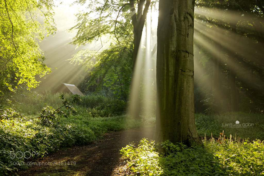 Photograph sun on the roof by Lars van de Goor on 500px