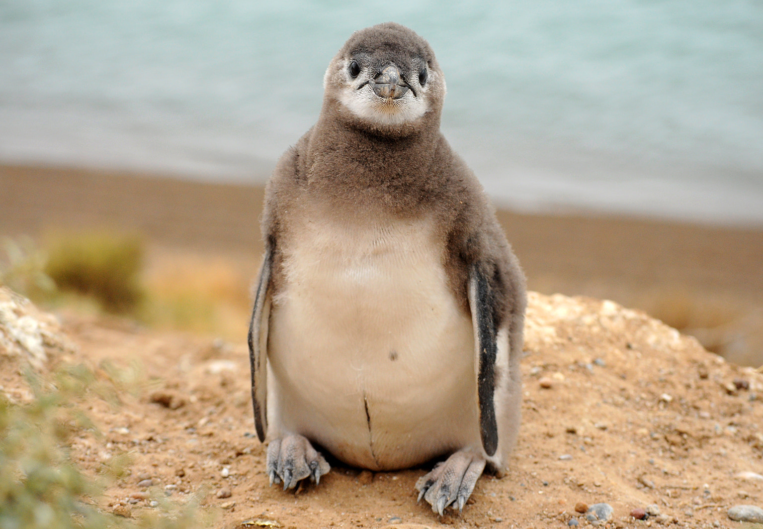 Photograph Penguin baby by Doreen Reichmann on 500px