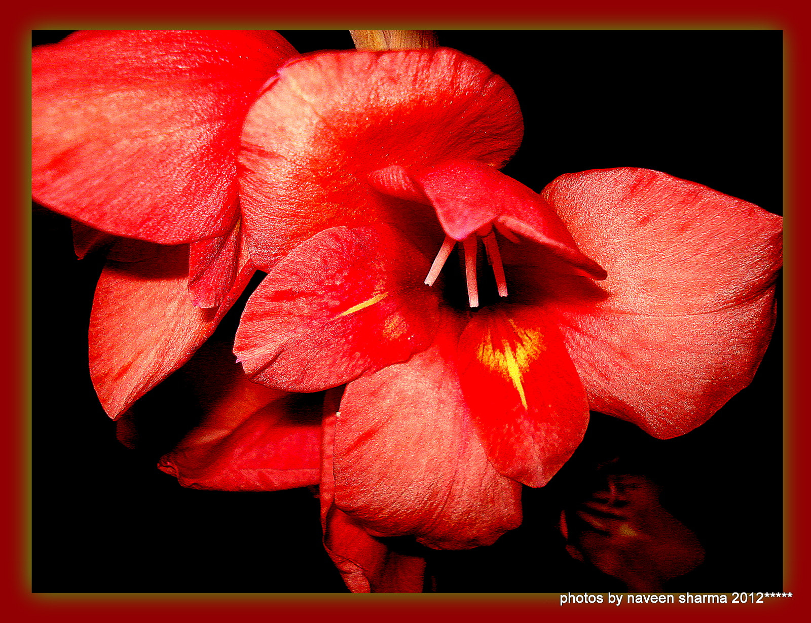 Photograph SUPER MACRO OF GLADIOLUS FLOWER by naveen sharma on 500px