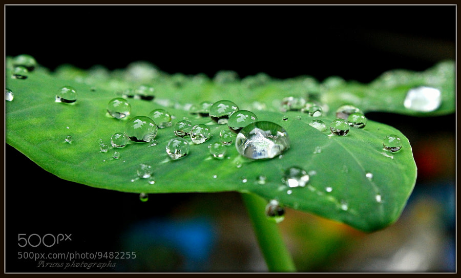 Photograph Rain Drops by Arun P. Nair on 500px