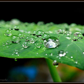 Rain Drops by Arun P. Nair (ArunPNair)) on 500px.com
