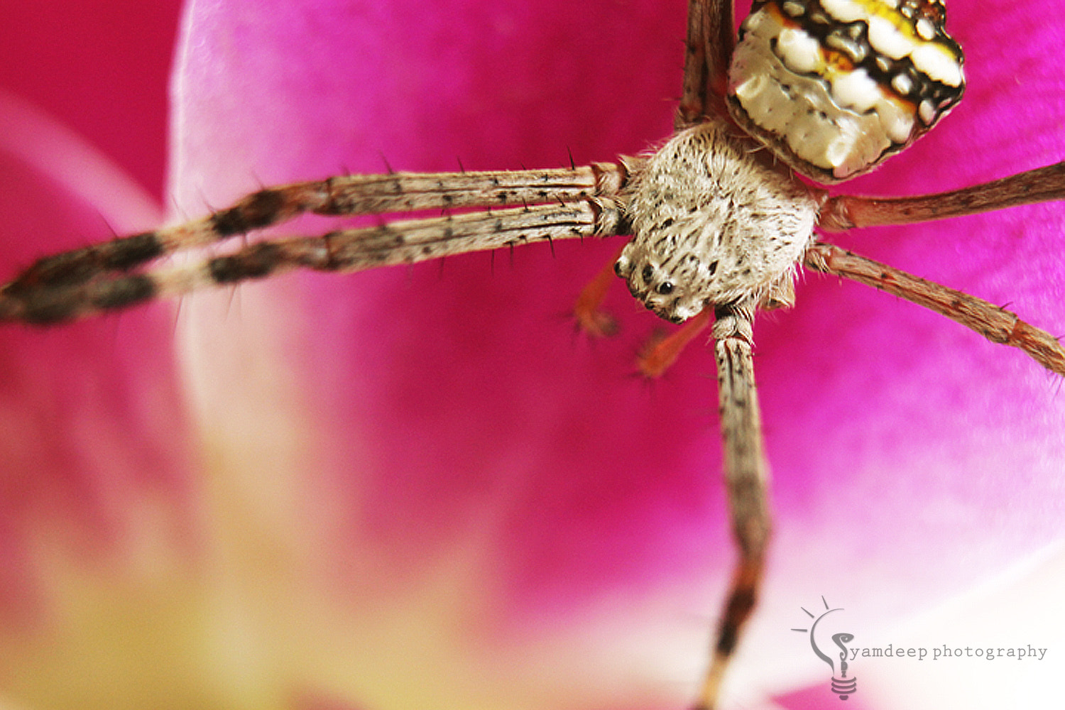 Photograph SPIDEY by Syamdeep Sasidharan on 500px