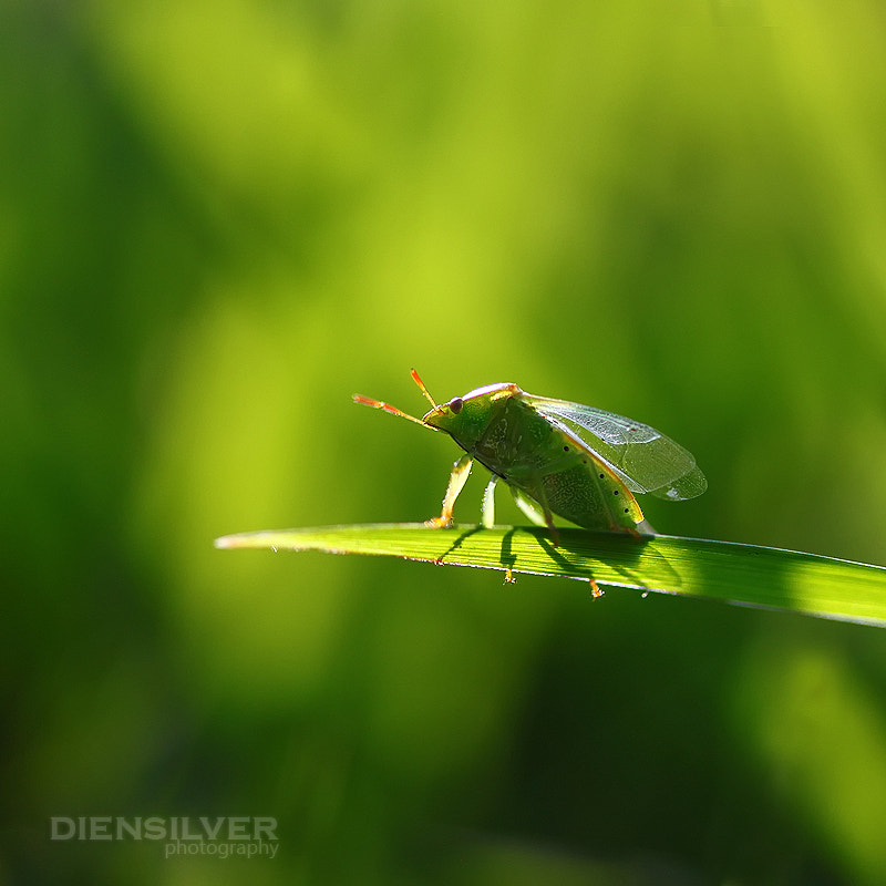 Photograph Green of green by Diens Silver on 500px
