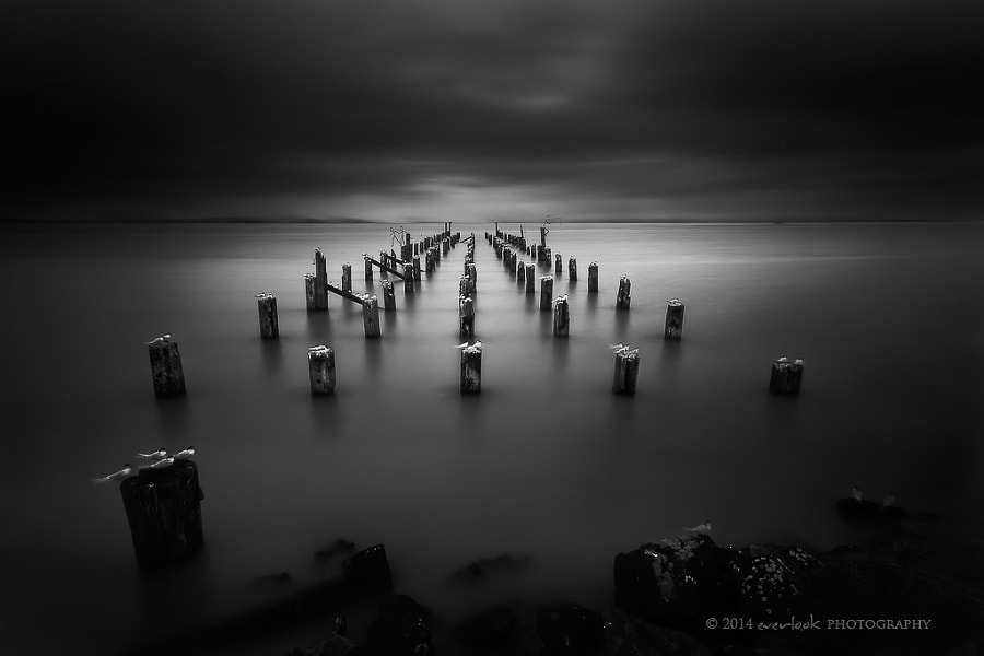 Photograph 49 Shades of Grey by Dylan Toh  & Marianne Lim on 500px