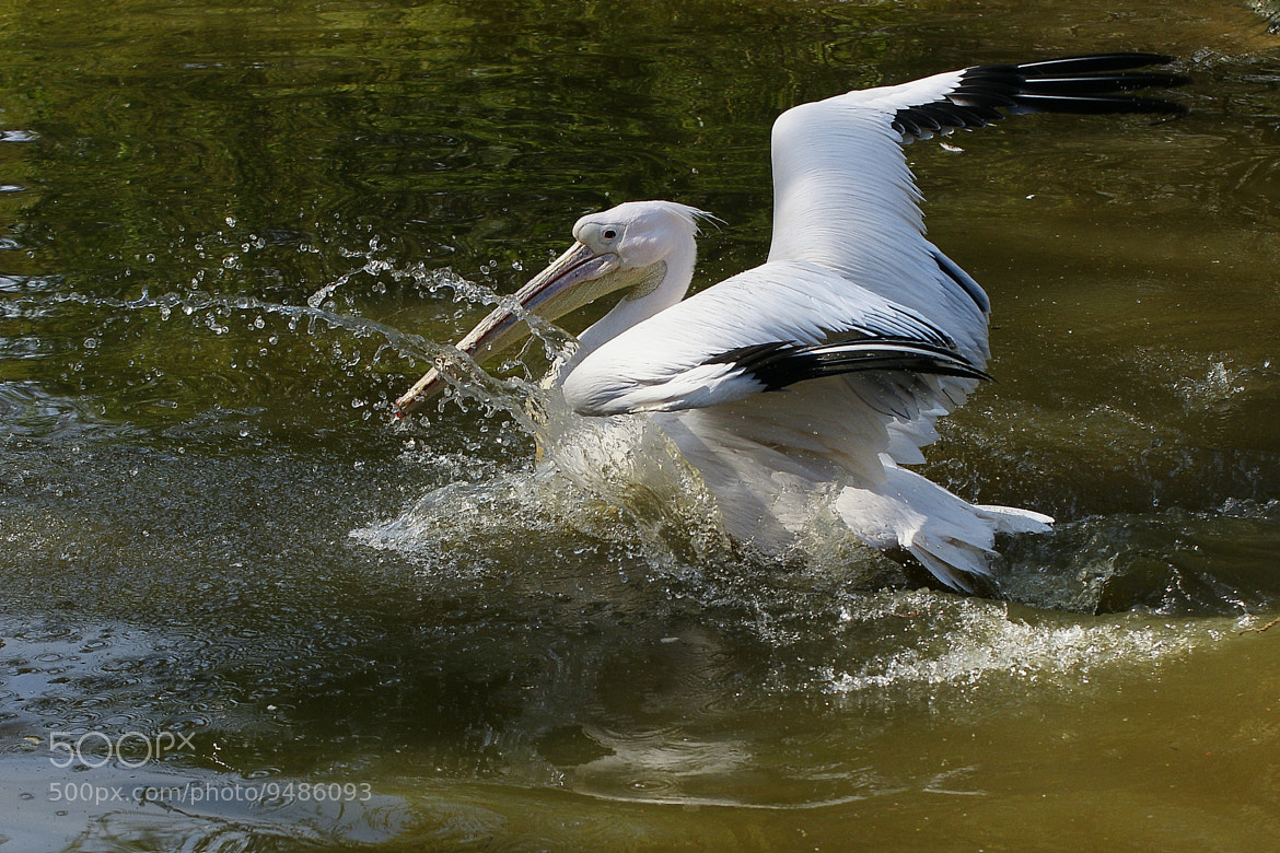 Photograph Landing by Branko Frelih on 500px