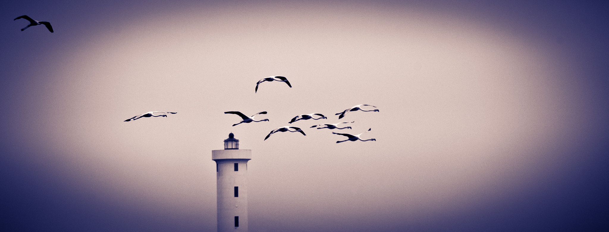 Photograph Flamingoes over light house by Mike Fisher on 500px