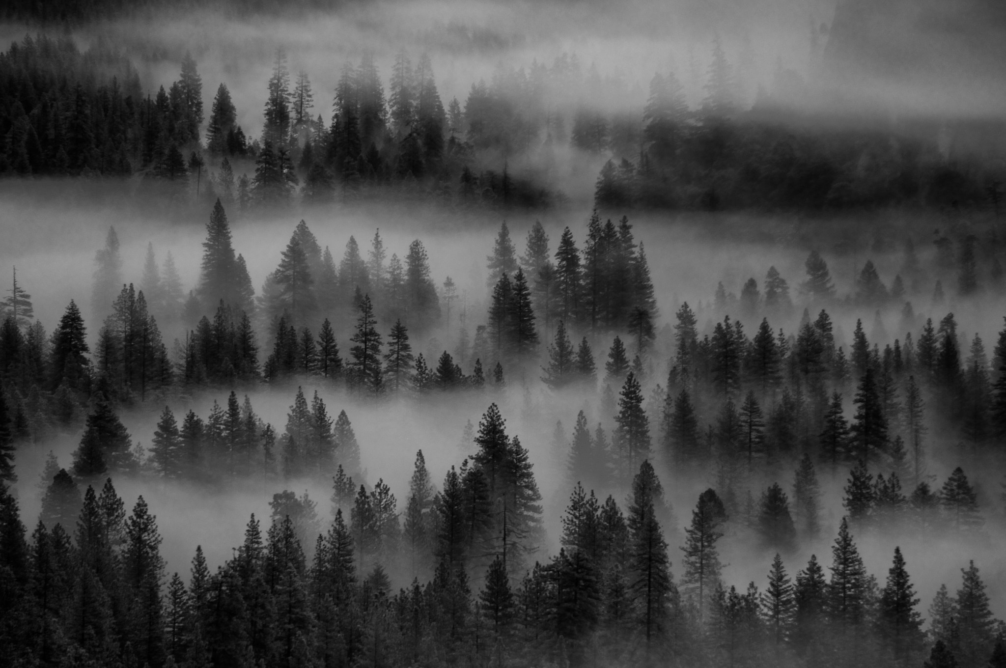 Photograph Misty Morning by Michael White on 500px