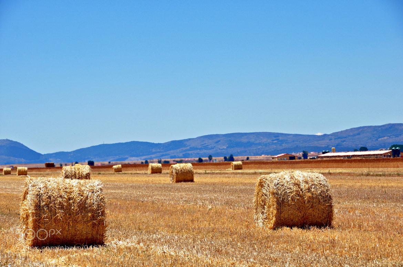 Photograph Campos de Castilla by Mercedes Salvador on 500px