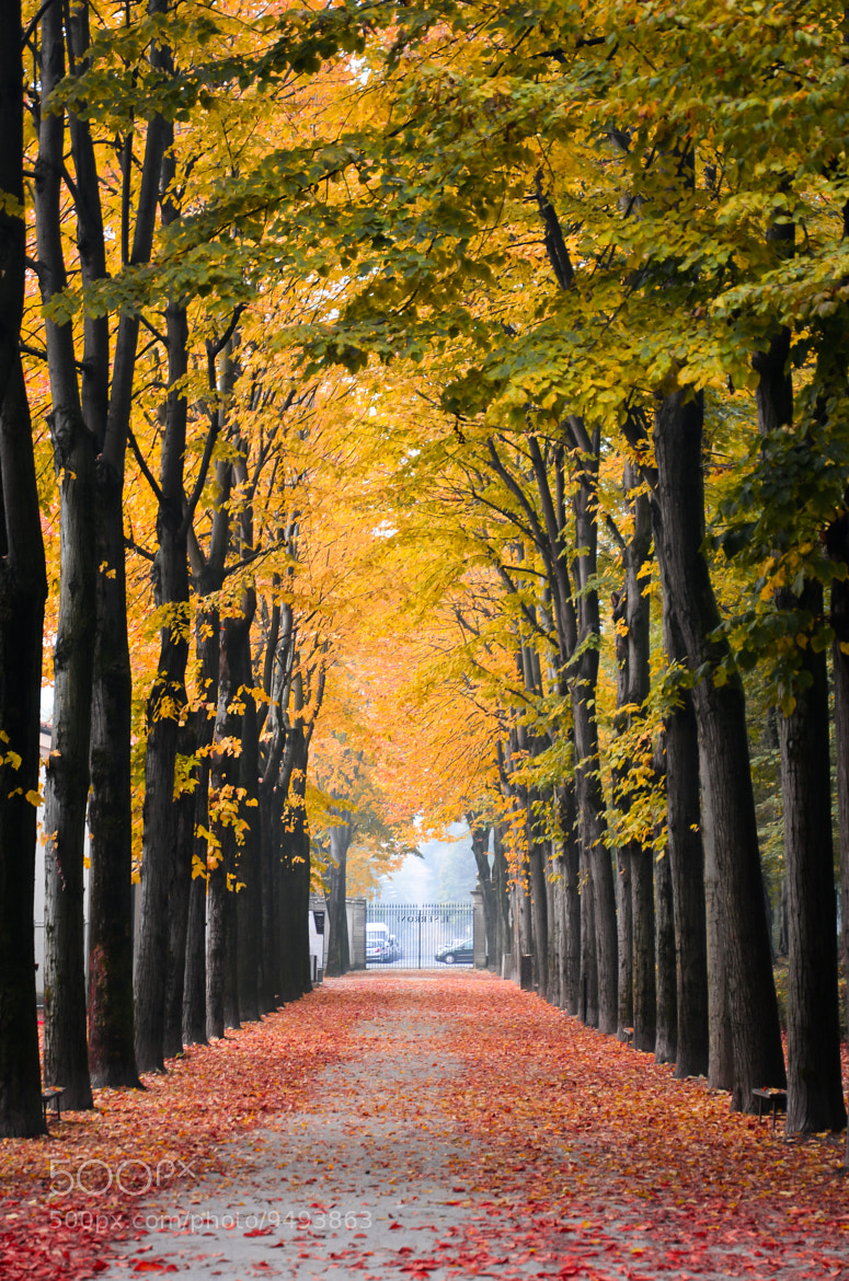Photograph Autumn Exit by Riccardo  Casarico on 500px
