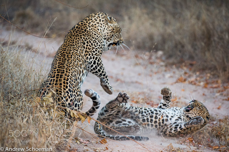 Photograph After the Mating by Andrew Schoeman on 500px