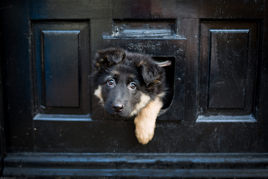 Catflap ? by David Leather on 500px.com