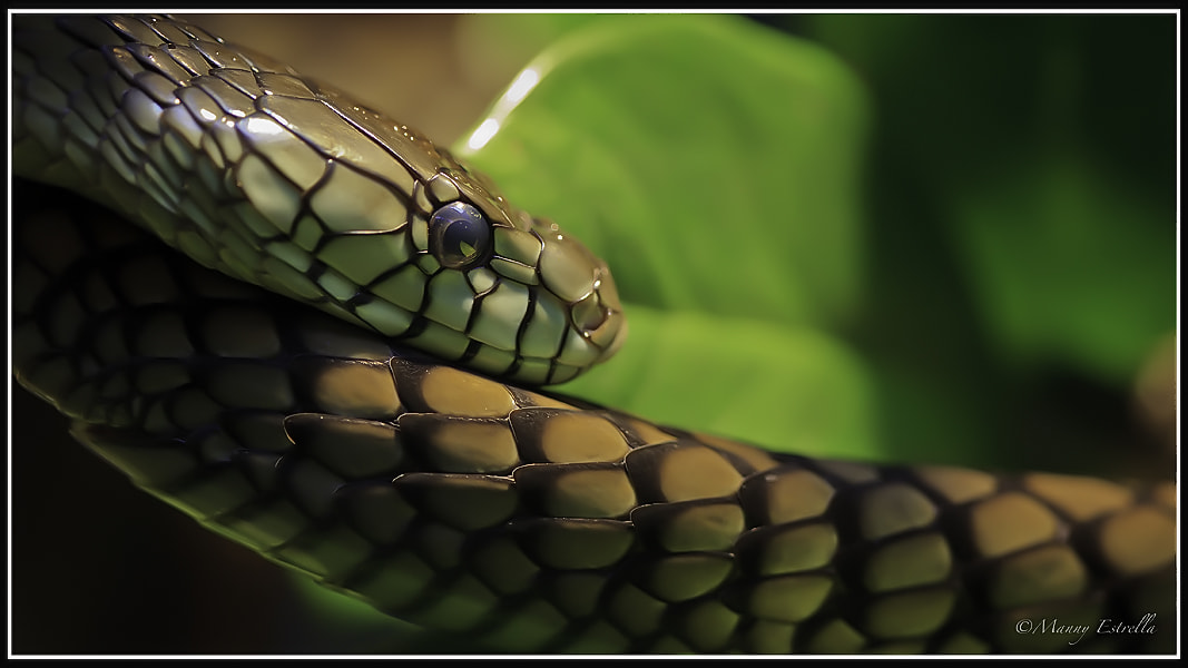 Photograph The Serpent's Back by Manny  Estrella on 500px