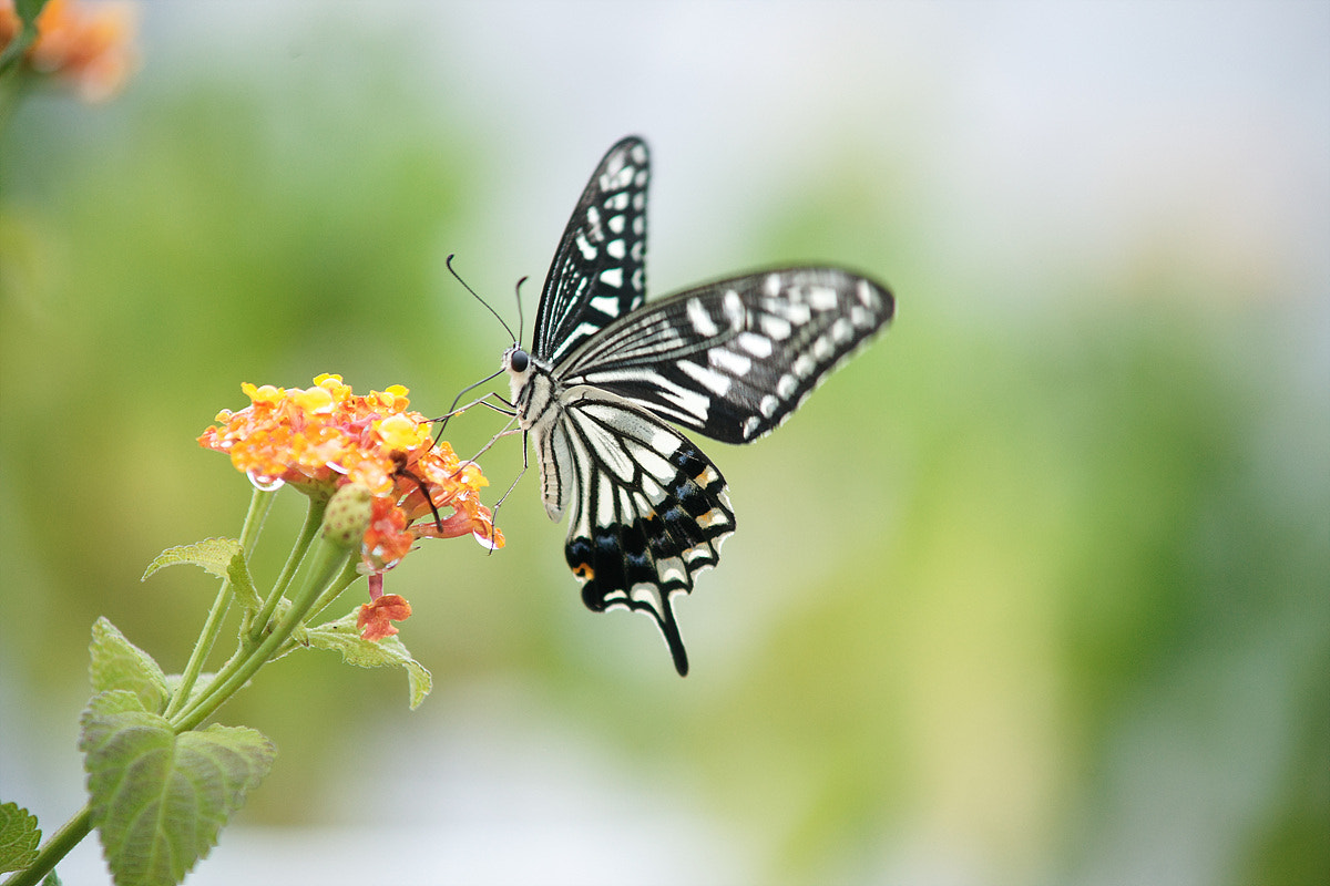 Photograph Butterfly by  Yeom on 500px
