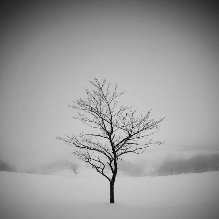 Photograph A Day in Snowy Lands #14 by Namdon Kim on 500px