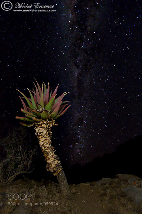 Photograph Succulent Sentinel by Morkel Erasmus on 500px