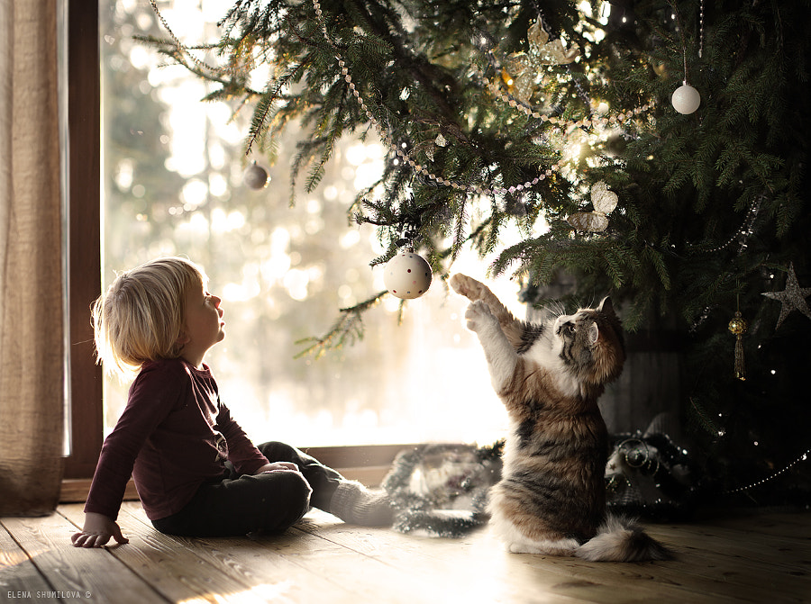 Photograph under the christmas tree.. by Elena Shumilova on 500px