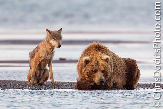Photograph Unlikely Fishin' Buddies by Christopher Dodds on 500px