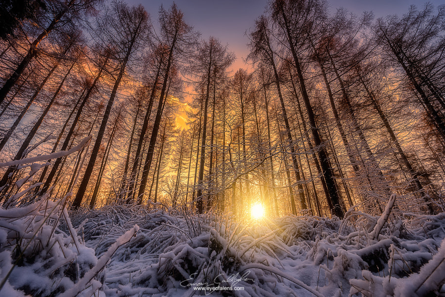 Photograph Ground Frost by Eamon Gallagher on 500px