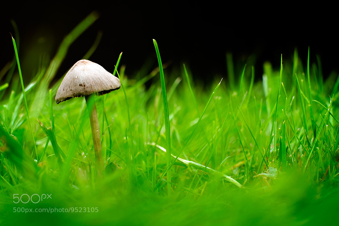Photograph Mushroom by Ulf Bjolin on 500px
