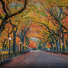 I entered central park at 0530 am the night before the marathon to photograph the wonderful trees at Poets Walk in peak autumn colors. To my surprise, I was not alone at all. The park was full of runners warming up before the run. I set up my gear at the Mall and waited patiently. In the glimpse of a second the path was empty and I got one single image without a handful of runners in it....