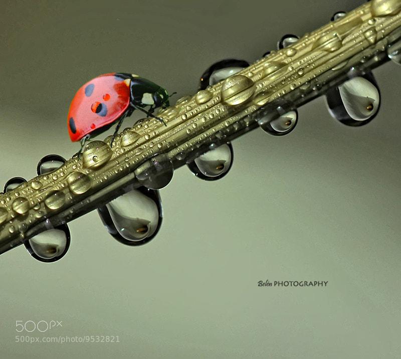 Photograph Ladybug... by Belén Argüeso Castelos on 500px